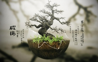 bonsai_chinese